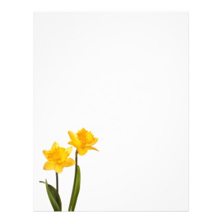 Yellow Daffodils on White - Daffodil Flower Blank Letterhead Template