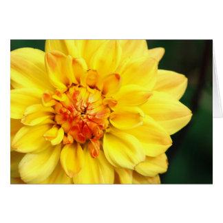 Yellow Dahlia Card