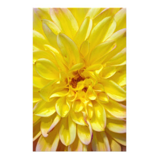 Yellow dahlia flower blossoms stationery design