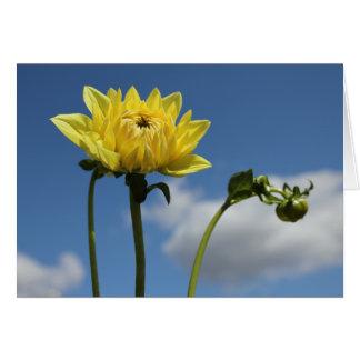Yellow Dahlia flower in the sun Card