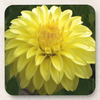 Yellow Dahlia On multiple Products Drink Coaster