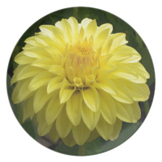 Yellow Dahlia On multiple Products Plate