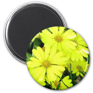 Yellow Daisies 2 Inch Round Magnet