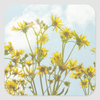 Yellow Daisies Daisy Flowers Square Stickers