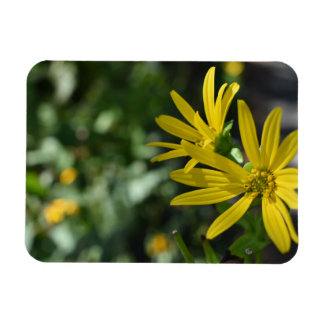 Yellow Daisy Flower Floral Nature Photography Magnet