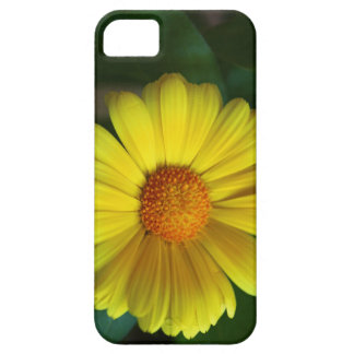 Yellow daisy iPhone 5 cover