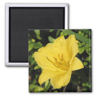 Yellow Day Lily Magnet
