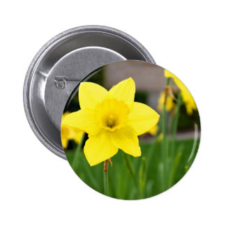 Yellow Delight-Spring Daffodil Pins