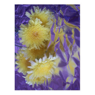 Yellow Desert Wild Flowers Postcard