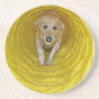 Yellow dog in Yellow tunnel with Yellow ball Coaster