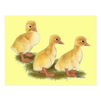 Yellow Ducklings Postcard