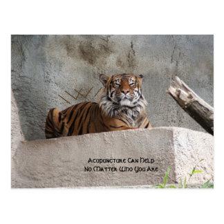Yellow Emperor Tiger Postcards