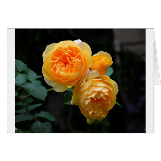 Yellow English Roses Card