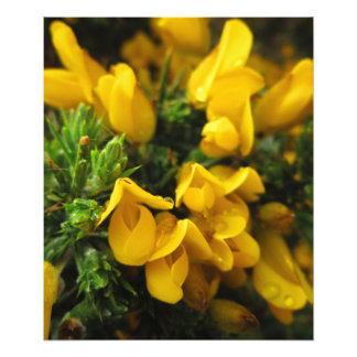 Yellow Evergreen Flowers Art Photo