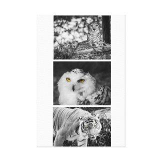 Yellow eyed Predators Canvas Print