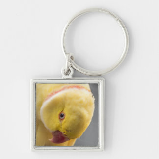 Yellow Fellow Keychain
