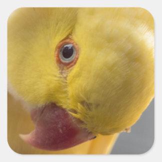 Yellow Fellow Square Sticker
