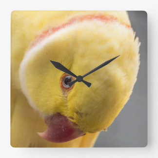 Yellow Fellow Square Wall Clock