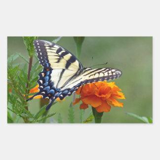 Yellow female Eastern Tiger Swallowtail