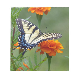 Yellow female Eastern Tiger Swallowtail Notepads
