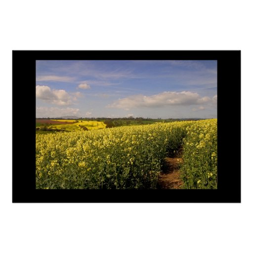 Yellow Field. Poster by cARTerART