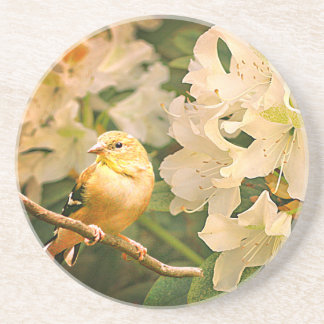 Yellow Finch and White Flowers - Coaster