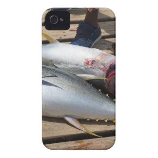 yellow fins tuna iPhone 4 covers