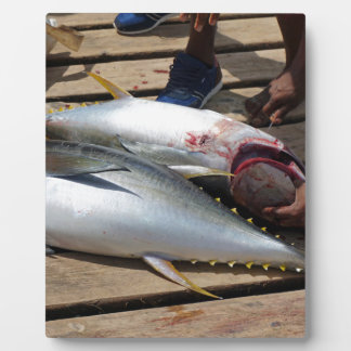 yellow fins tuna plaque
