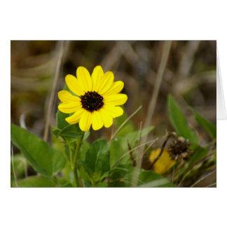 Yellow Florida Wildflower Card