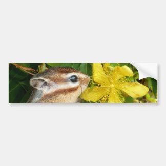 Yellow flower and Chipmunk (4) Bumper Sticker