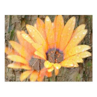 Yellow Flower Bark Postcard