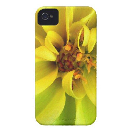 Yellow Flower (Blackberry)