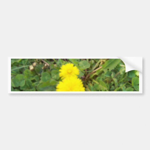 yellow flower bumper stickers