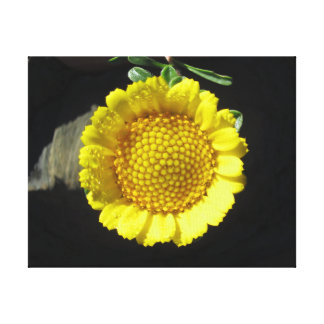 Yellow Flower Gallery Wrap Canvas