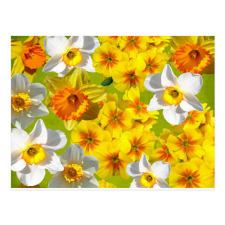 Yellow Flower Graphic Postcard