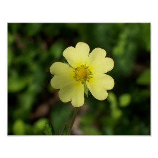Yellow flower photograph 11x14 poster