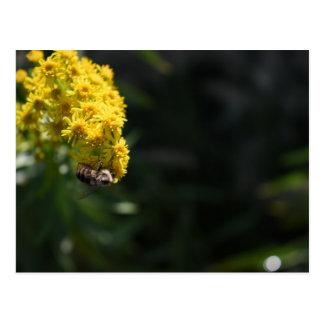 Yellow Flowers Bee Bumblebee Nature Photography Postcard