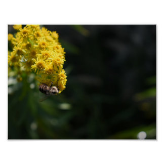 Yellow Flowers Bee Bumblebee Nature Photography Poster