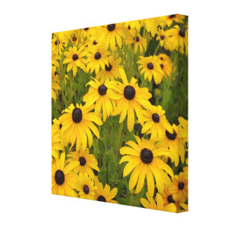 Yellow Flowers- Black Eyed Susans Canvas Print