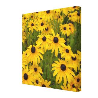 Yellow Flowers- Black Eyed Susans Canvas Print