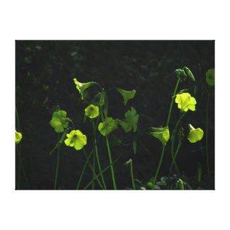Yellow Flowers Stretched Canvas Prints