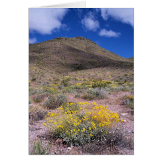Yellow Flowers in Death Valley Card