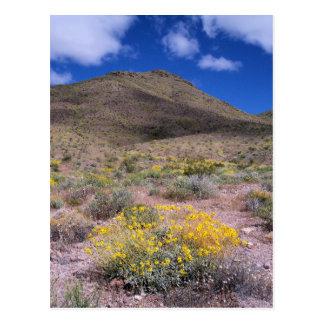 Yellow Flowers in Death Valley Postcard