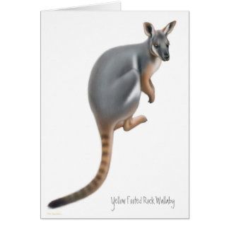 Yellow Footed Rock Wallaby Card