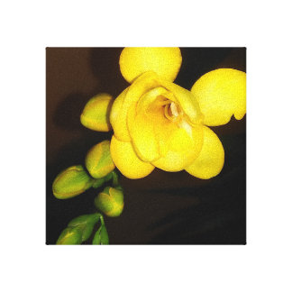 Yellow Freesia Flower And Bud Canvas Print
