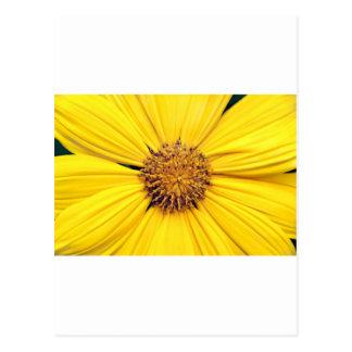 Yellow Gerbera Daisy Background.jpg Postcard