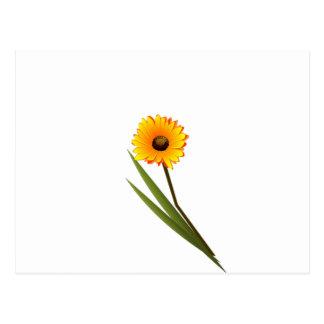 Yellow Gerbera Flower Clipart Postcard