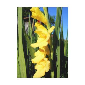 Yellow Gladiolus Canvas Print