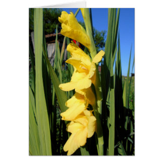 Yellow Gladiolus Card