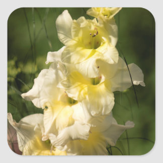 Yellow Gladiolus Flower Spike Square Sticker